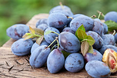 Plums on an old wooden table. Royalty Free Stock Image