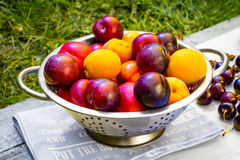 Plums and peaches in the garden royalty free stock photos