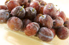 Plums on a plate. Wet hungarian plums on a plate with water droplets stock photography