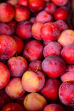 Plums plucked from orchard Stock Photos