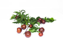 Plums. Plum with a variety suitable for use Stock Photos