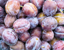 Plums Plums and More Plums Stock Images