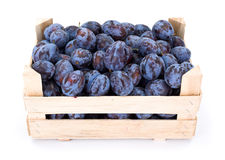 Plums (Prunus) in wooden crate Stock Images
