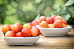 Plums - red plums Stock Photography