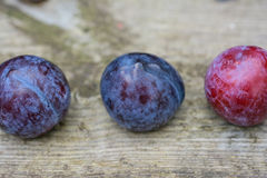 Plums in a row Stock Photo