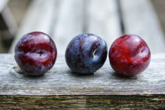 Plums in a row Royalty Free Stock Image