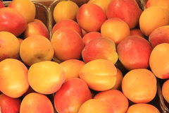 Plums seasonal fruit farming Emilia Romagna Italy. Peaches plums seasonal fruit farming Emilia Romagna Italy stock photography