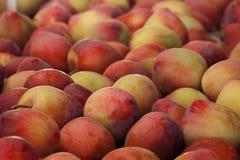 Plums seasonal fruit farming Emilia Romagna Italy Stock Photography