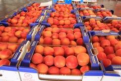 Plums seasonal fruit farming Emilia Romagna Italy Royalty Free Stock Image
