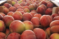 Plums seasonal fruit farming Emilia Romagna Italy Stock Images