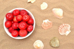 Plums and shells Stock Image