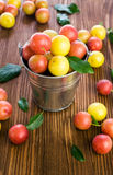 Plums in a small bucket Royalty Free Stock Photo