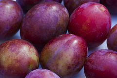 Plums. Some newly harvested victoria plums Royalty Free Stock Photo