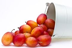 Plums spilling from a container Stock Photos