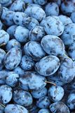 Plums in supermarket store Royalty Free Stock Photos