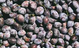 Plums Texture. Plums are good in any form. For many centuries people eat delicious, juicy, fresh fruit, cooked jam, prunes do Stock Photos