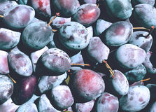Plums Texture. Plums are good in any form. For many centuries people eat delicious, juicy, fresh fruit, cooked jam, prunes do Royalty Free Stock Images