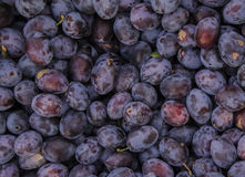 Plums texture. A large number of excellent ripe plum Royalty Free Stock Image