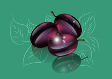 Plums tree Royalty Free Stock Photos