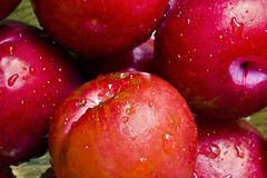 Washed plums. A close-up of fresh, washed plums Stock Image