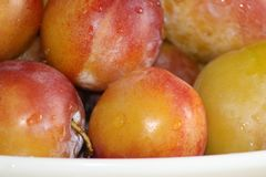 Plums with water drops on them royalty free stock photo