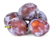 Plums on a white background. Stock Photography