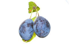 Plums on white Royalty Free Stock Photography