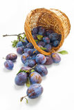 Plums and a wicker basket Stock Image