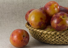 Plums wickerwork oval shape Stock Image