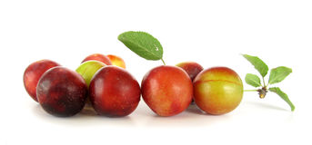 Plums wild ringlovs Stock Images
