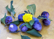 Plums on wooden background. Plums on a wooden background with yellow flower royalty free stock photography