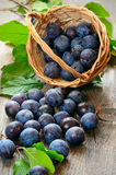 Plums on the wooden table Stock Photo