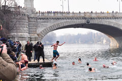 Plunge of polar bears into river Po, Turin, Italy. Stock Photography