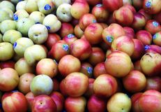 Pluots. Royalty Free Stock Photo