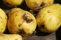 Plus d'abeilles Images libres de droits