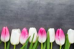 Plus de tulipe sur le fond gris Photographie stock