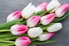Plus de tulipe sur le fond gris Photo stock