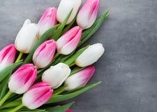 Plus de tulipe sur le fond gris Image libre de droits