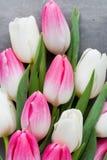 Plus de tulipe sur le fond gris Images stock