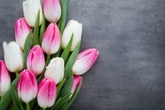 Plus de tulipe sur le fond gris Images libres de droits