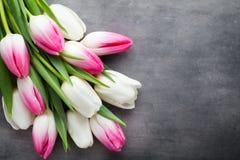 Plus de tulipe sur le fond gris Photos stock