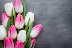 Plus de tulipe sur le fond gris Photos libres de droits
