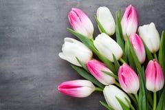 Plus de tulipe sur le fond gris Photo libre de droits