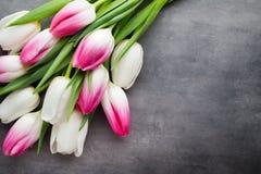 Plus de tulipe sur le fond gris Photographie stock libre de droits