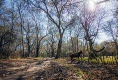 Plus grande forêt naturelle de noix de World's, nichée dans une vallée luxuriante des mensonges de gamme de montagne de Kyrgyzs images libres de droits