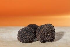 Plus parfumé des champignons, la truffe noire française Images libres de droits