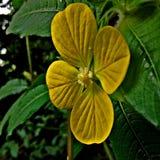 Plus petite fleur jaune Image libre de droits