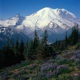 Plus pluvieux et wildflowers de la crête de Dege, Mt Rainier National Park, Washington images libres de droits