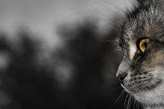 Plus que l'univers aux yeux d'un chat Photographie stock libre de droits