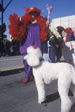 Plus sized woman with a poodle marching in the Doo Dah Parade, Pasadena, California Royalty Free Stock Images